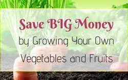 Gardening – Growing your own Vegetables